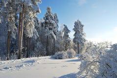 Winter fairy tale Stock Image