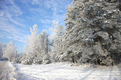 Winter fairy-tale in countryside on sunny day Royalty Free Stock Image