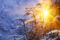 In winter fairy tale Royalty Free Stock Photography