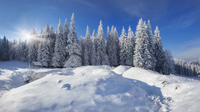 Winter fairy tale after heavy snowfall Stock Photography