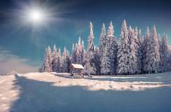 Winter fairy tale after heavy snowfall in the mountain forest Stock Photography