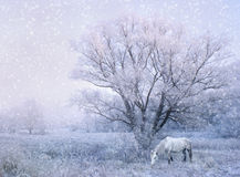 Winter fairy tale Stock Images