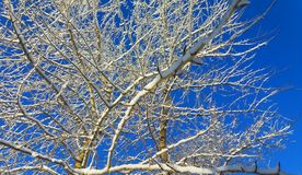 Winter fairy tree. A fabulous snowy and sunny winter day Stock Image