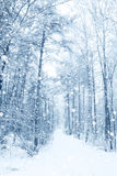 Winter fairytale Royalty Free Stock Images