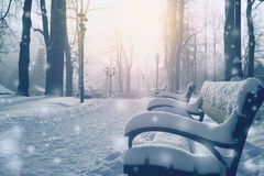 Winter fairytale alley full of snow Royalty Free Stock Image