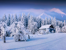 Winter fairytale, heavy snowfall covered the trees and houses in Stock Image