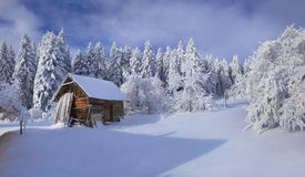 Winter fairytale, heavy snowfall covered the trees and houses in Royalty Free Stock Images