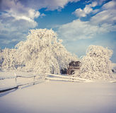 Winter fairytale, heavy snowfall covered the trees and houses Royalty Free Stock Photography