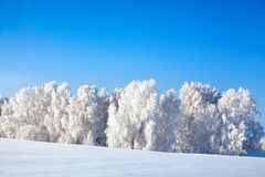 Winter fairytale landscape, white birch trees covered with hoarfrost shine in sun light, snowdrifts on bright blue sky backgrond stock photo