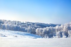 Winter fairytale landscape, white birch trees covered with hoarfrost shine in sun light, snowdrifts on bright blue sky backgrond stock image