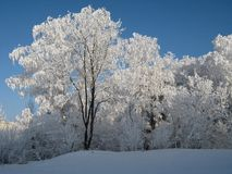 Winter fairytale. Winter landscape with white trees Royalty Free Stock Photo