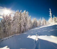 Winter fairytale scene in the mountain forest. Stock Photos