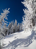 Winter fairytale scene in the mountain forest Stock Photography