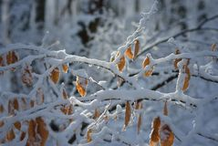 Winter and fall Royalty Free Stock Photography