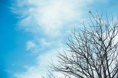 Winter fall tree on blue sky. Peace calm nature postcard wallpaper stock photos