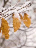 Winter falls in Navarre. Close-up of a tree with is arms cover with snow Stock Images