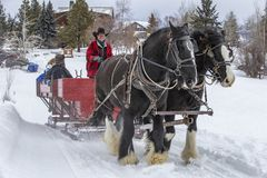 Winter fan sleigh ride with beautiful Percheron horses