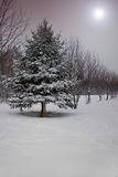 Winter Fantasy. A fantasy image Stock Image