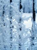 Winter fantasy. Fence Royalty Free Stock Photos