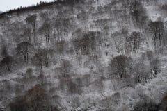 Winter in farbenreichem lizenzfreie stockfotos