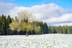 Winter Farm Field Landscape Stock Image