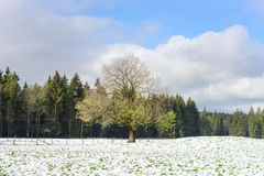 Winter Farm Field Landscape Royalty Free Stock Images