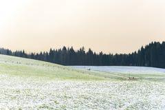 Winter Farm Field Landscape Stock Photography