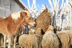 Winter on the farm. Royalty Free Stock Photo