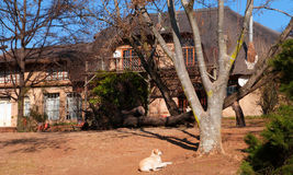 Winter Farm House. This old farmhouse is situated in Magaliesberg, in South Africa. The photo was taken during the winter so all the leaves are off the trees Royalty Free Stock Photos