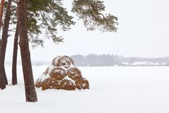 Winter Farm Landscape. Haystacks in snow. horizontal shot Stock Images
