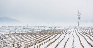 Winter farm Royalty Free Stock Photography