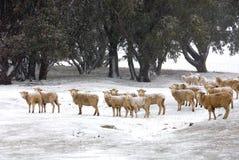Winter Farm Scene Stock Images
