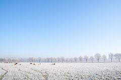 Winter farmland Royalty Free Stock Photos