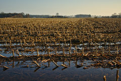Winter farmland after the rain Royalty Free Stock Image