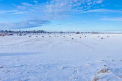 Winter farmland scenery Royalty Free Stock Photos