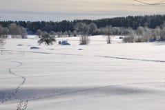 Winter-Feld Lizenzfreies Stockfoto