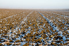 Winter-Feld Stockfotos