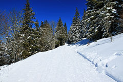 Winter on the Feldberg in the Black Forest Royalty Free Stock Photos