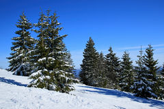 Winter on the Feldberg in the Black Forest. Winter on the Feldberg which is the highest mountain in the Black Forest Royalty Free Stock Photo