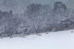 Winter-Felder im Blizzard-Hintergrund Lizenzfreie Stockbilder