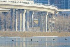 Winter Fen River Scenery royalty free stock photos