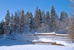 Winter fence. Snow landscape with a conifers and fence stock photography