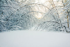 Winter Fence. Winter time snow in Canada Stock Image