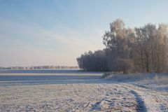 Winter field Royalty Free Stock Photo