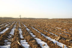 Winter field. Fields after the winter snow Royalty Free Stock Photography