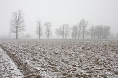 Winter on the field Royalty Free Stock Photography