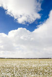 Winter field Royalty Free Stock Images