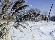 Winter field Lizenzfreies Stockfoto