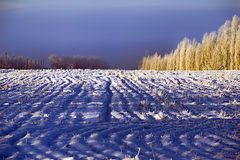Winter field Lizenzfreies Stockfoto