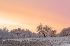 Winter field and apple tree Royalty Free Stock Photo